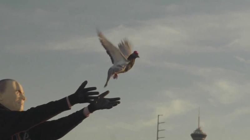 Pigeons wearing MAGA hats