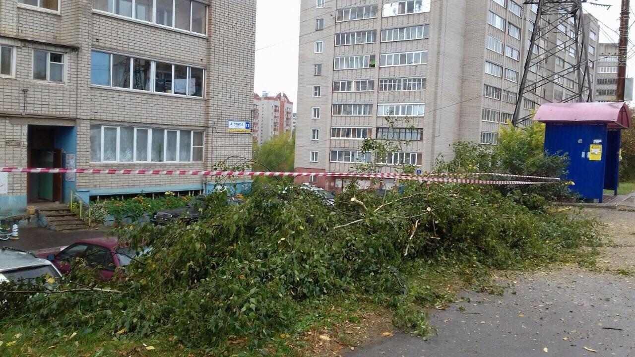 Спиливание аварийных деревьев улица Упита дом 13