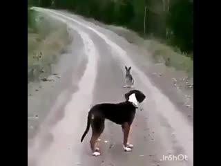 Думаю после такого, хозяин собаку поменял...