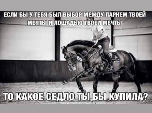 васильева стихи про конный спорт до слез керамика