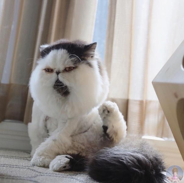 Zuu  котейка, который выглядит так, как мы себя чувствуем к середине рабочей недели