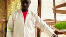 The 'step by step' of how to grow hydroponic barley wheat fodder in Africa