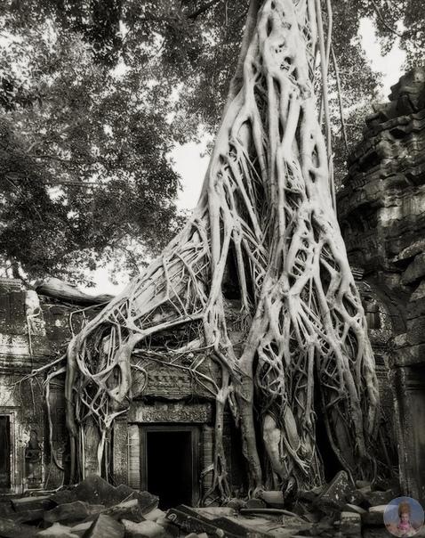 Бет Мун живет в Сан-Франциско, США Женщина путешествует по всему миру, снимая самые древние деревья, которым уже больше 1000 лет. Размер и мощь этих деревьев