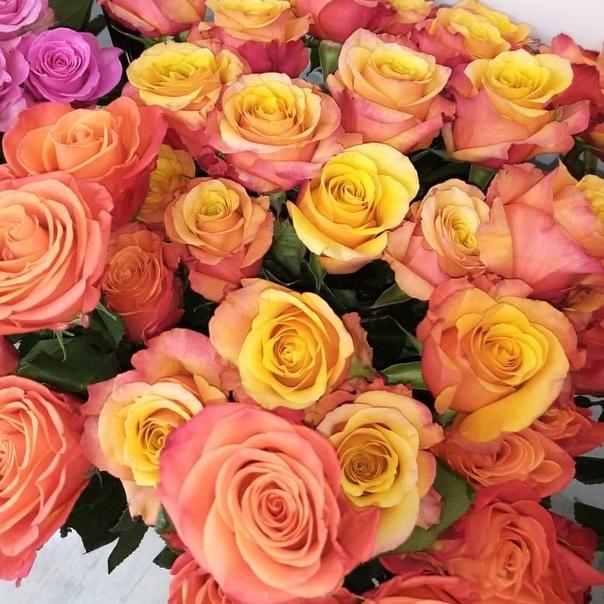 Поздравление донны розы из бразилии с юбилеем