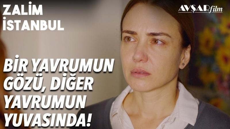 Ceren Oğluma Aşık! Şeniz Seher'i Gaza Getiriyor! | Zalim İstanbul 22. Bölüm