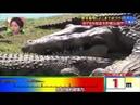 Crazy Japanese Crocodile Prank