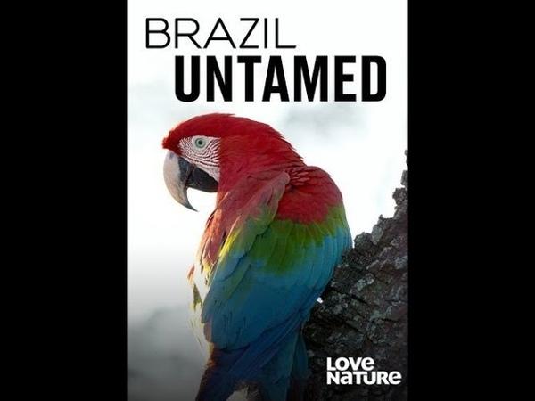 Дикая Бразилия Brazil Untamed Серия 6 Обезьяны Амазонии 4К