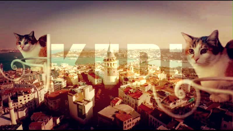 ❀ Город кошек ❀ Kedi (2016) HDRip (Documentary) ❀ «Кеди» - потрясающий фильм про кошек Стамбула (тур. İstanbul) ❀ [HD720p] ❀