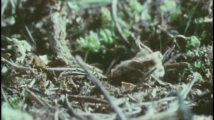 BBC Живая планета 3 Северные леса