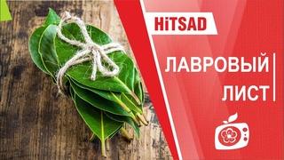 Лавровый лист   Видео обзор  hitsadtv