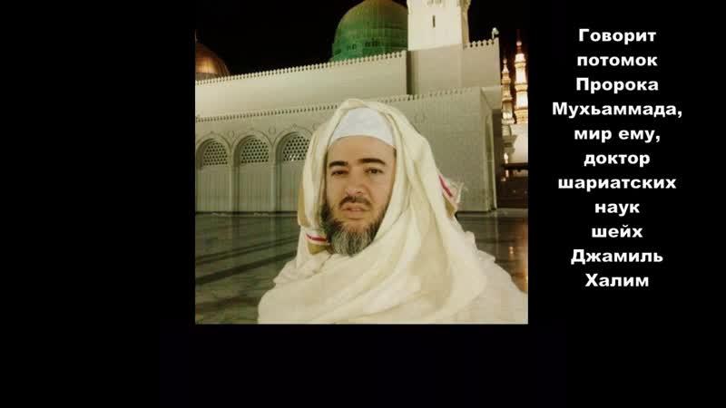 В интернете много лжи - Шейх Джамиль Халим.mp4