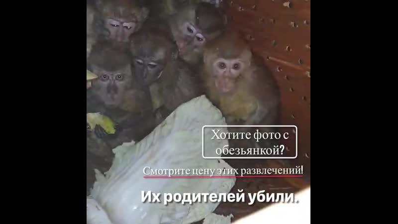 Малыши яванских макак в брянском приюте Второй шанс