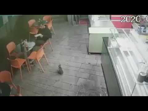 לראות ולא להאמין בן אדם באילת מפתה חתול ואז הורג אותו
