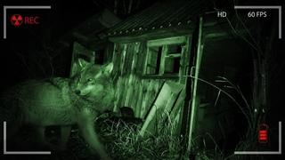 Оставил скрытые камеры на ночь в Чернобыле. Что нам удалось заснять в Зоне Отчуждения?