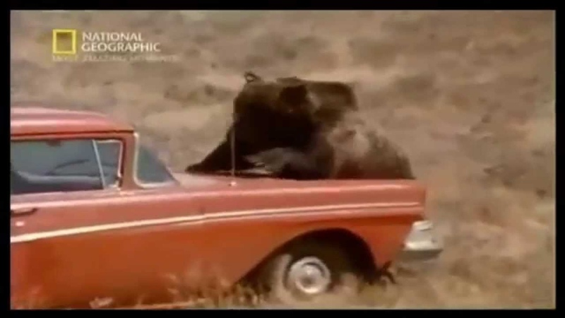 НЕ ЗАСНУЛ! Медведь испугал людей | Mad Bear scare people