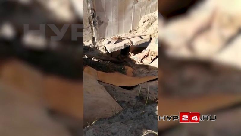 Спасение собаки из выгребной ямы в Новом Уренгое