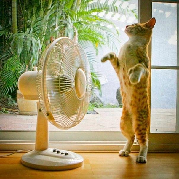 До +34ºС жары обещают синоптики на выходных в Курской области