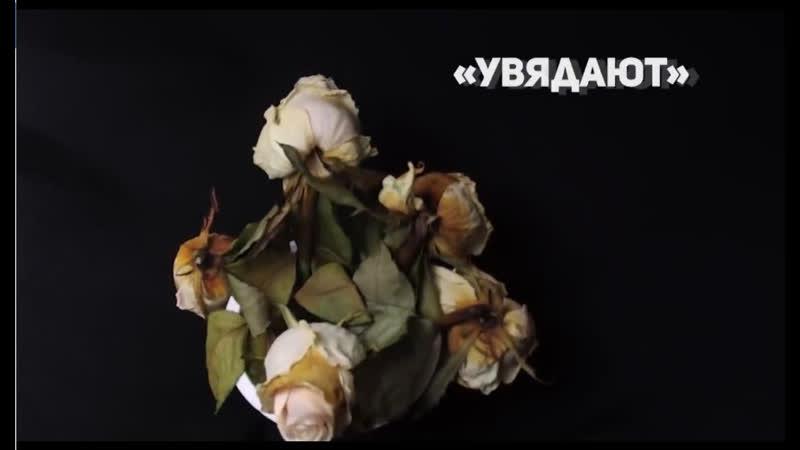 Почему на Руси не дарили срезанных цветов...