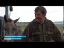 Перестали охотиться на дичь и перешли на домашний скот В Баяндаевском районе волки нападают на лоша