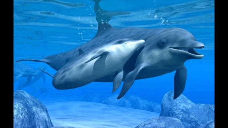 Tiernos delfines bebes