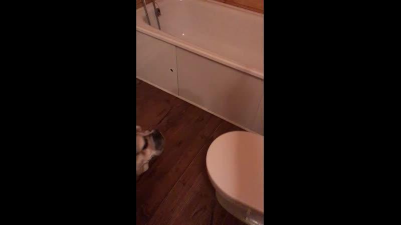 Елочка забирается в ванну