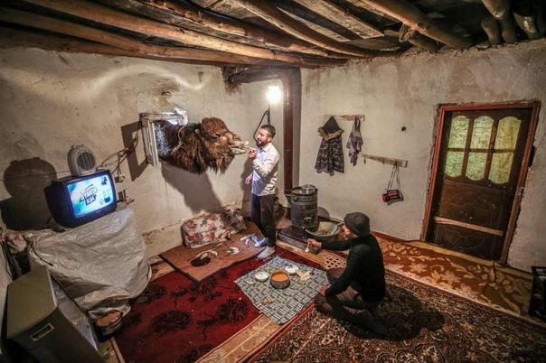 Пастухи Мустафа и Баран Эрбай готовят верблюда к соревнованиям по верблюжьим боям