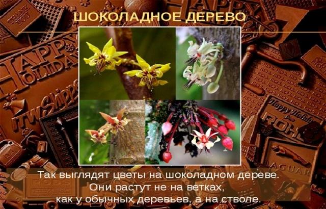Познавательно- игровой час «Шоколаду каждый рад» (11 июля- Всемирный день шоколада)., изображение №2