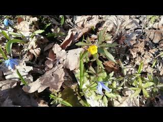 Вобликова Д. С. Весенние цветы
