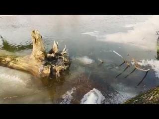 Река Илеть. В поисках хищника.Дикая и очень красивая природа.