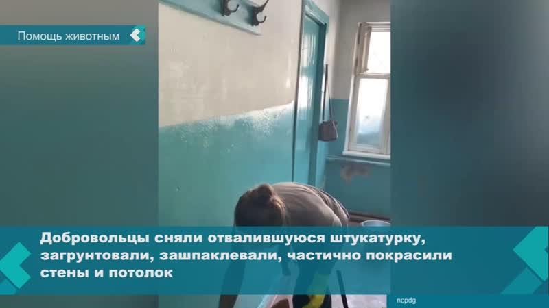 В выходные добровольцы приехали в Новосибирский центр по проблемам домашних животных и провели уборку