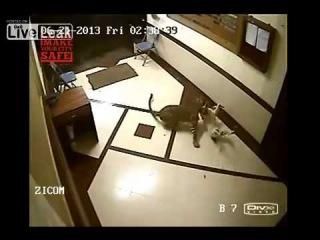 Индия, Мумбаи, камера видеонаблюдения. Леопард проник в незапертое жильё, сцапал собаку и был таков. Пёс даже не услышал его приближения.