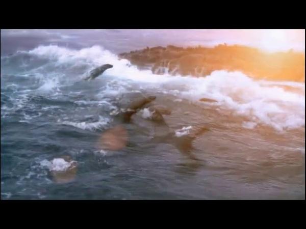 Shallow - Мария Панюкова и Максим Швыряев (cover Леди Гага и Бредли Купер)