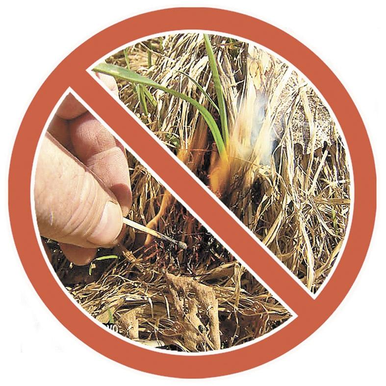 Администрация г. Донецка предупреждает о недопущении сжигания сухой природной растительности или её остатков