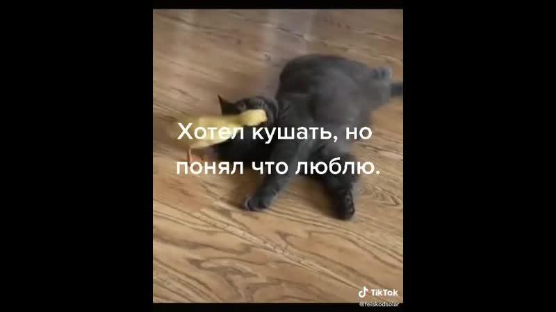 Video 1c4558a7354602e14ec5206b1ad77980