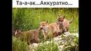 Веселые картинки. Смешные лисы. Приколы про лис.