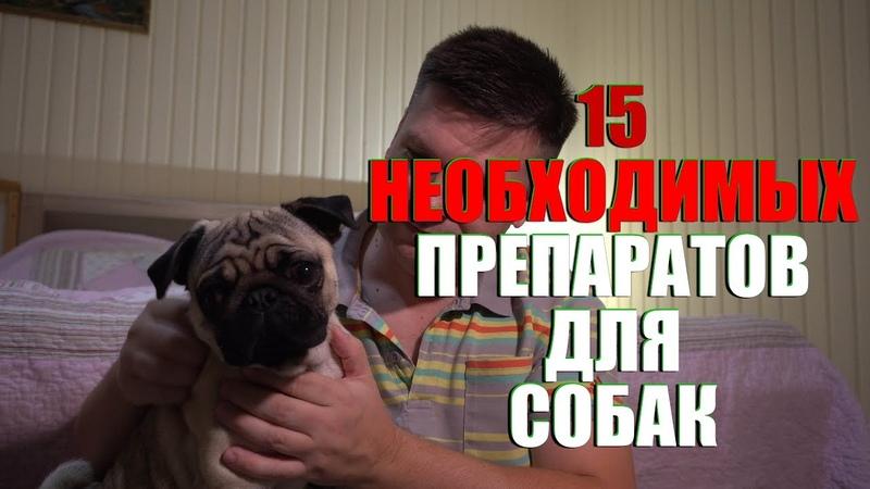 15 необходимых препаратов в аптечке для собак.