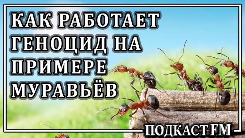 ДЕГРАДАЦИЯ МУРАВЕЙНИКА, ИЛИ МОДЕЛЬ УМИРАЮЩЕГО ОБЩЕСТВА (аудиокнига)