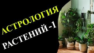 Магия трав | Астрология растений -1