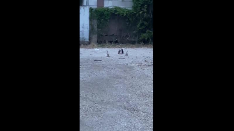 Первая прогулка котят на большой улице