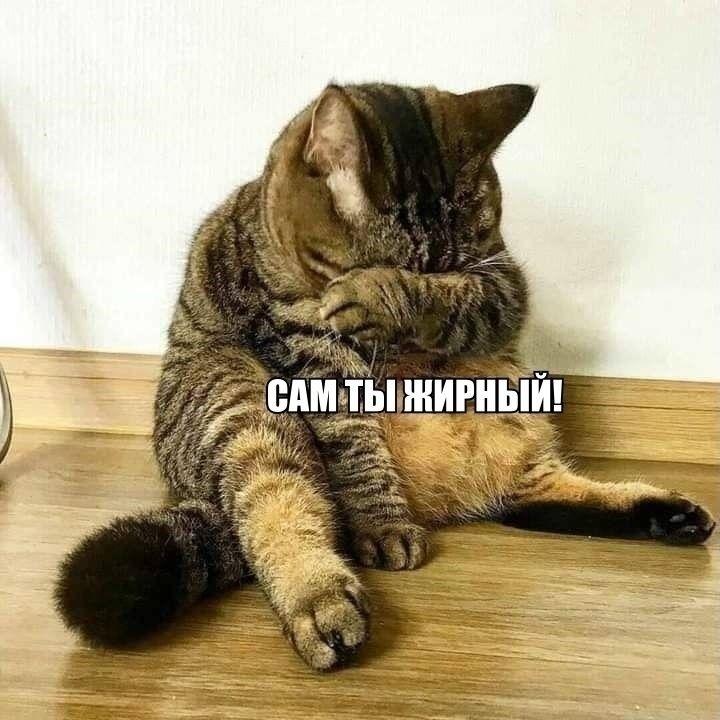 Кота обидеть может каждый
