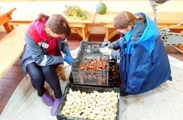 К 8 Марта в Липецке высадят 15 тысяч тюльпанов