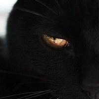 Фотография профиля Антона Карпенко-Саввинова ВКонтакте