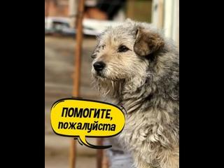 Video by Искусство Можайского приюта