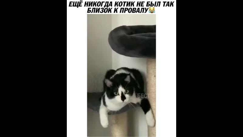 Опасный котик