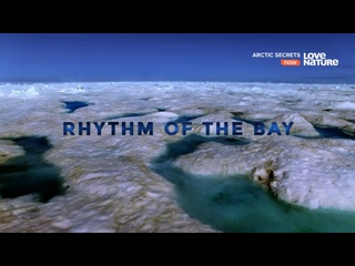 Тайны Арктики - Ритм залива | 2 сезон: 1 серия из 3 | 2017 | HD 1080