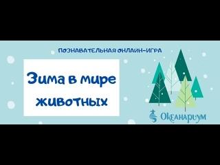 """Познавательная игра """"Зима в мире животных"""""""