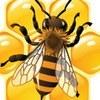 Пчеловод СПБ. Мёд и прополис в Санкт-Петербурге