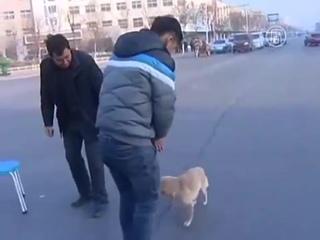 Собака не покидала погибшего друга всю ночь