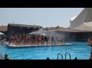 PoolParty.mp4