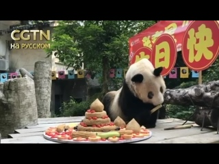 Большая панда отметила 37-ой день рождения